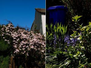Walkley Springtime Photography